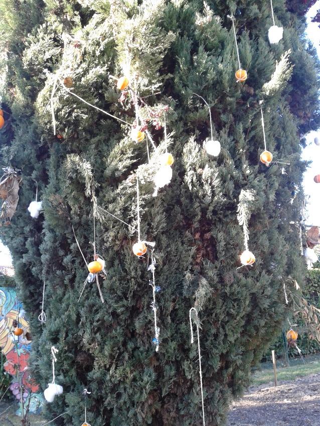 Noel au jardin de Lapanouse