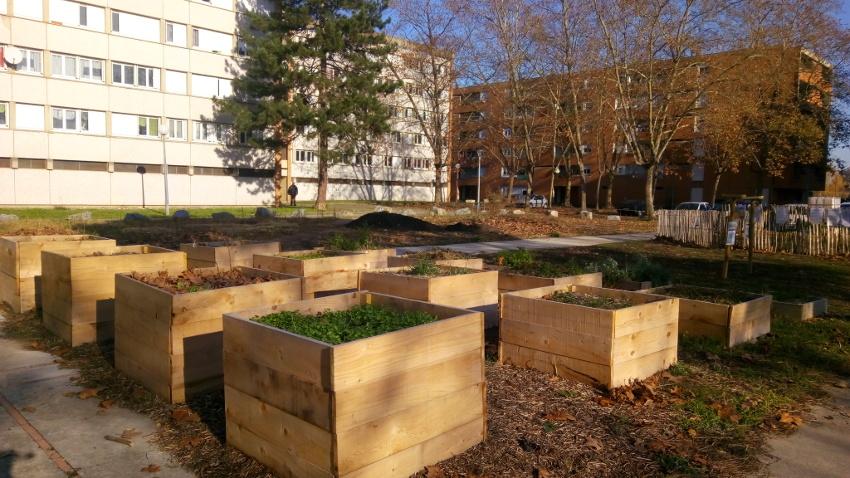 Un an au jardin: square Augereau, Albi, Cantepau Demain
