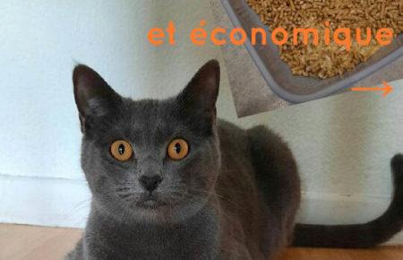 Litière pour chat à composter ! économique et écologique
